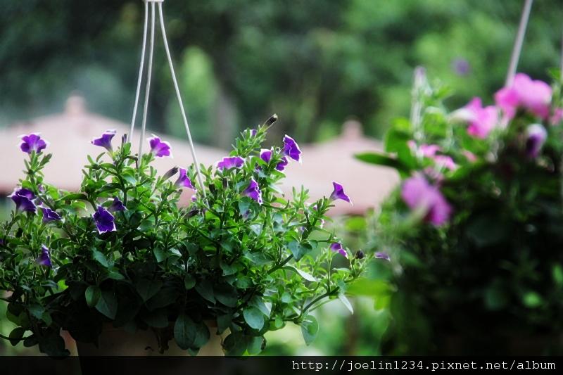 20120627宜蘭有機農村體驗IMG_4370