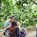 八里柚花IMG_5361