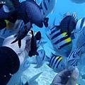 長灘島潛水
