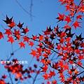 京都大原_IMG_8077.JPG