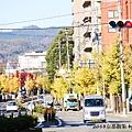 京都銀杏_IMG_8795.JPG