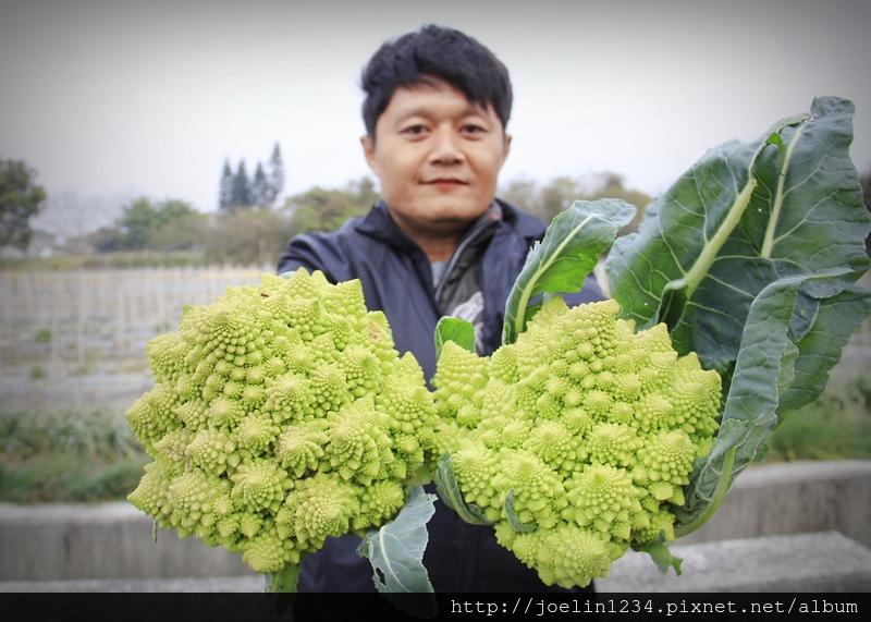 雲林元長_佛頭花椰菜