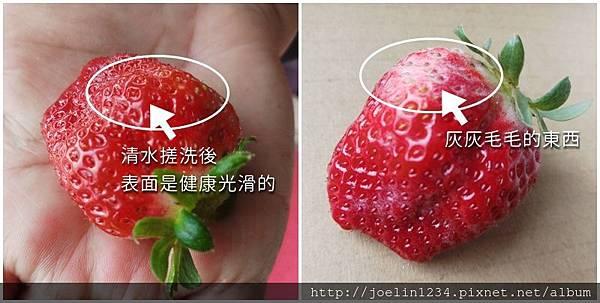 草莓發霉傻傻分不清楚