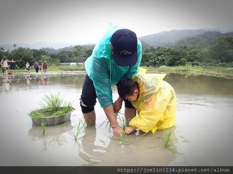 2019雙溪卯豐農場插秧體驗