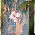 台中石岡IMG_7453.JPG