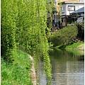 20100327垂柳.jpg