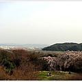 日本京都賞櫻032.jpg