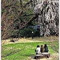 日本京都賞櫻019.jpg