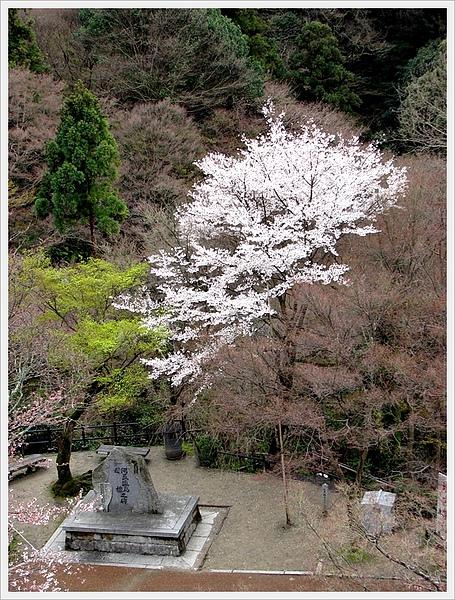 日本京都賞櫻026.jpg