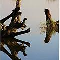 20101129宜蘭羅東林業文化園區46.jpg