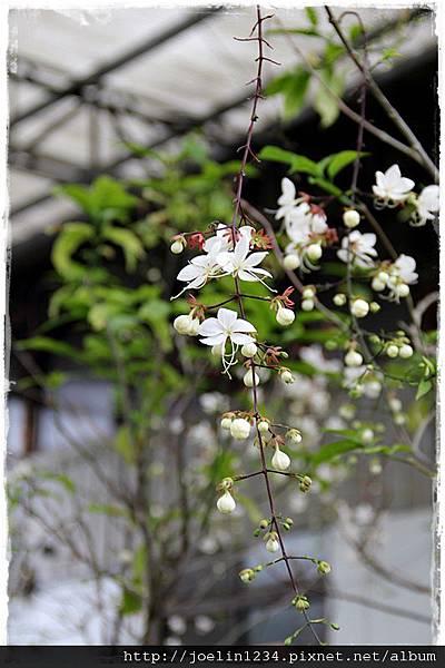 台中石岡IMG_7461.JPG