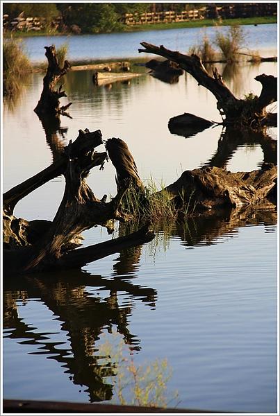 20101129宜蘭羅東林業文化園區34.jpg