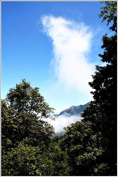 201007台中大雪山05.jpg
