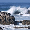 17-Mile Drive, California (14)