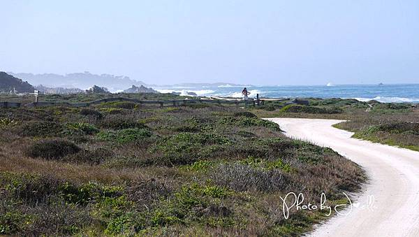17-Mile Drive, California (16)