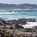 17-Mile Drive, California (21)