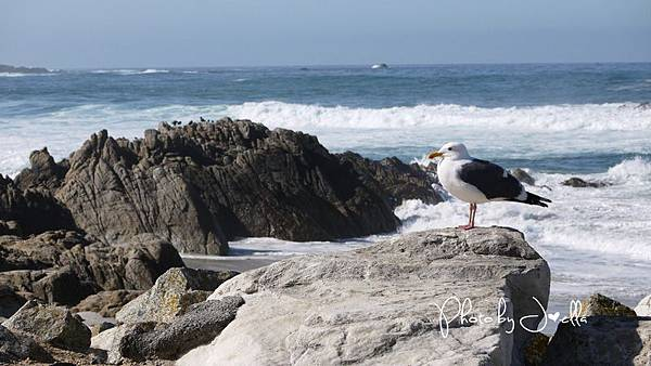17-Mile Drive, California (29)