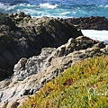 17-Mile Drive, California (33)
