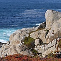 17-Mile Drive, California (35)