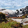 17-Mile Drive, California (36)