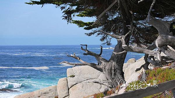 17-Mile Drive, California (37)