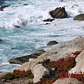 17-Mile Drive, California (38)