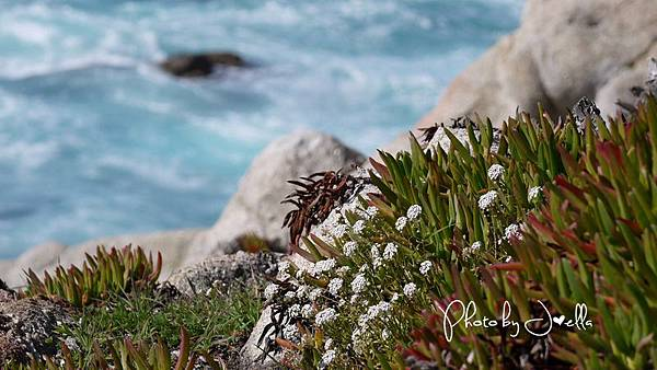 17-Mile Drive, California (39)
