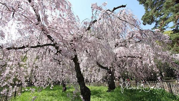 京都御苑 (1)