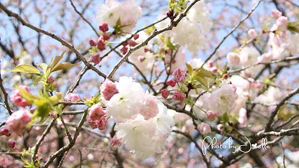 京都御苑 (6)