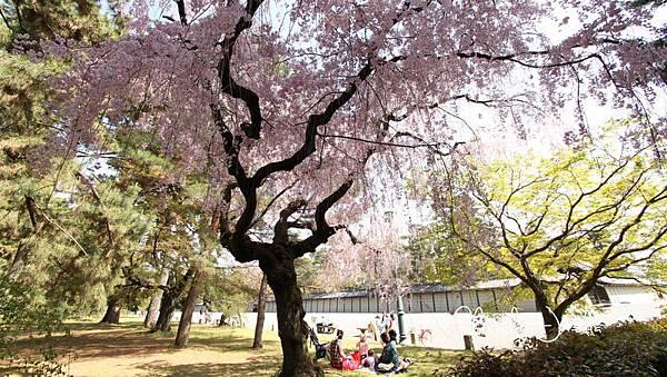 京都御苑 (23)