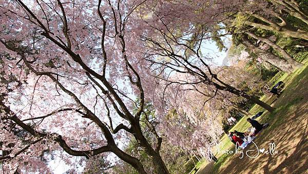 京都御苑 (24)