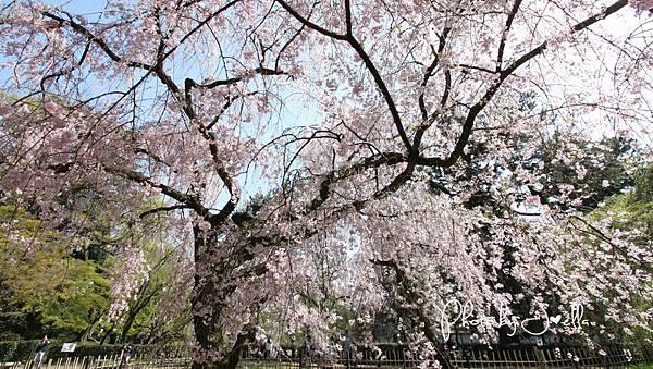 京都御苑 (25)