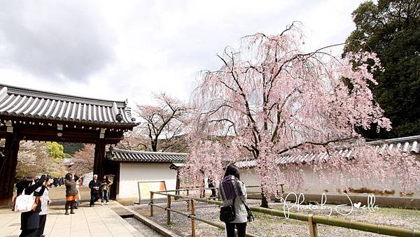 nEO_IMG_醍醐寺 (2)
