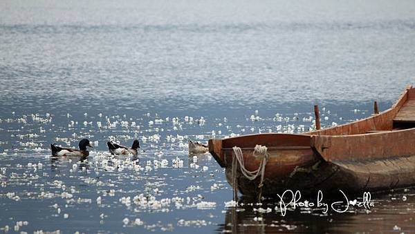 瀘沽湖 (5)