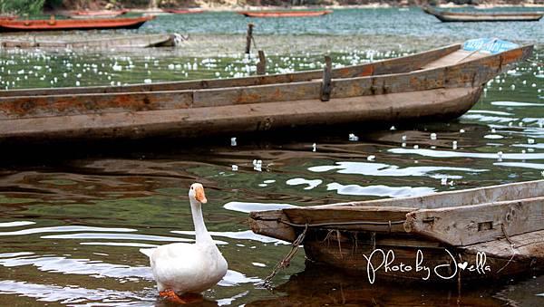 瀘沽湖 (14)