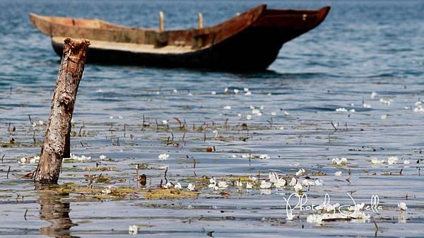 瀘沽湖 (15)