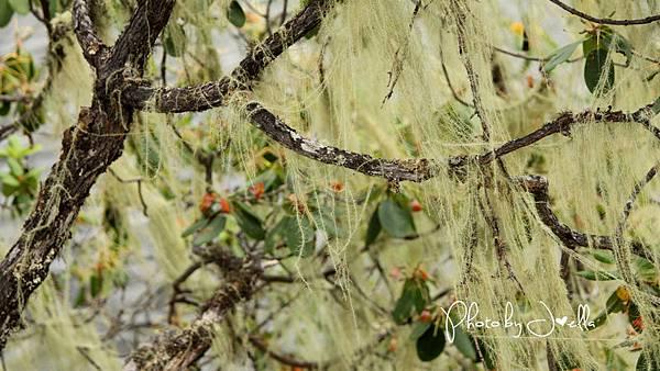香格里拉2日遊_6普達措國家公園 (8)