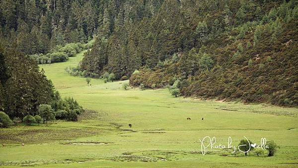 香格里拉2日遊_6普達措國家公園 (11)
