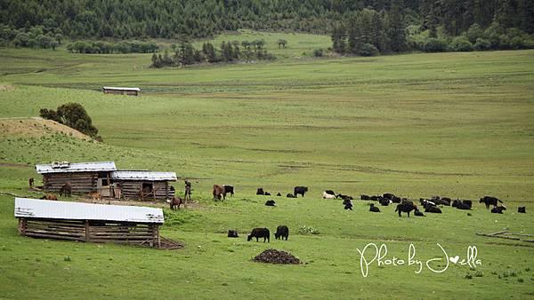 香格里拉2日遊_6普達措國家公園 (12)