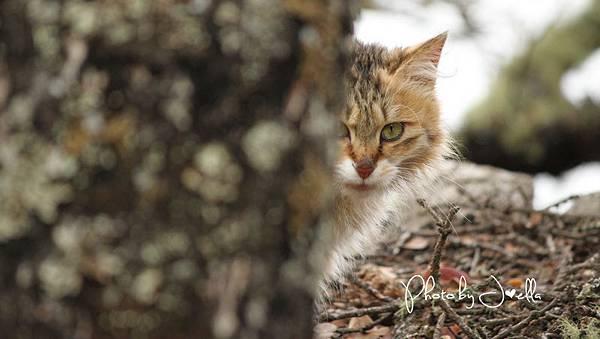 香格里拉2日遊_6普達措國家公園 (18)