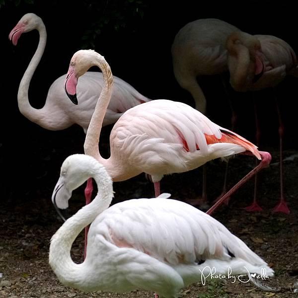 吉隆玻飛禽公園(KL Bird Park) (15).jpg