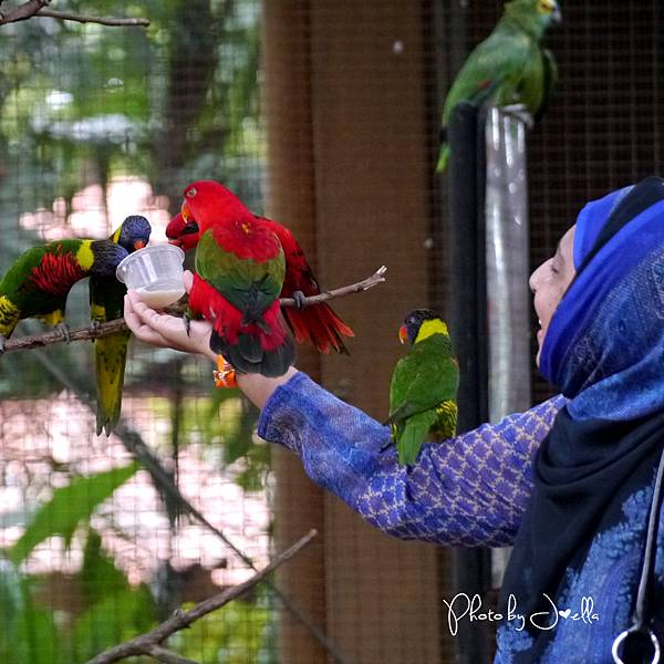 吉隆玻飛禽公園(KL Bird Park) (16).jpg