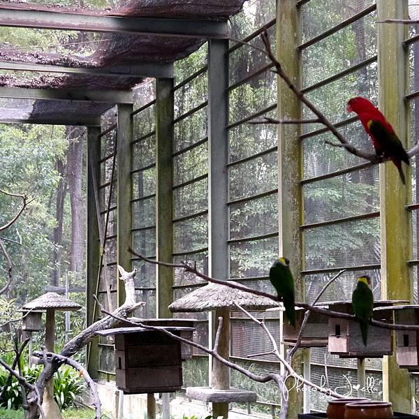 吉隆玻飛禽公園(KL Bird Park) (19).jpg