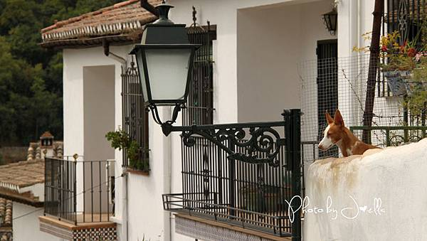 格拉納達(Granada)  (23).jpg