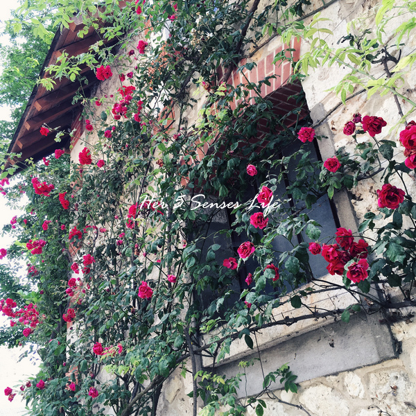 國際花園節_BLOG (27).jpg