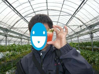 stawberry.JPG