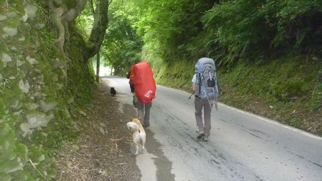 一路跟隨我們上山的小黑&小白