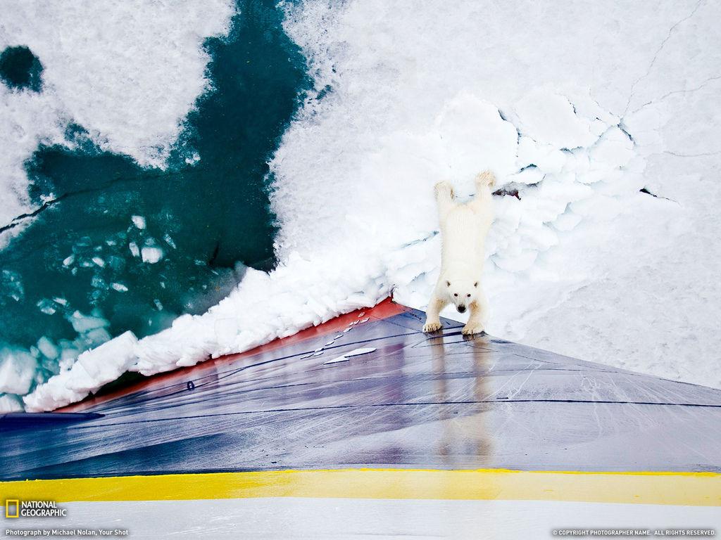 北極熊徒手擋破冰船