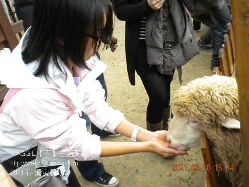 2011 春 清境農場 015.jpg