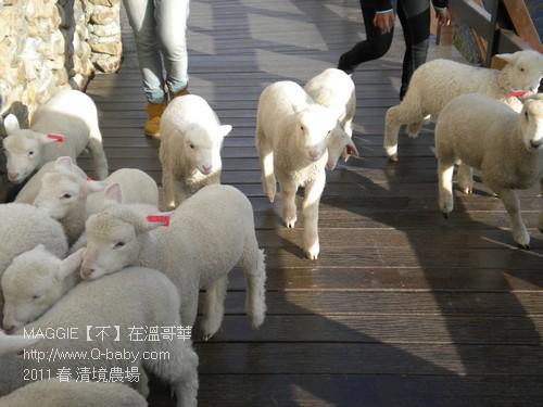 2011 春 清境農場 021.jpg